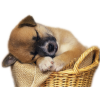 3d Cute Dog Animal image #22315