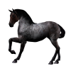 3d Horse Animal image #22313