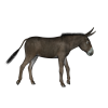 Animal, Donkey, Black image #47516