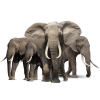 Animal Elephant Family image #43238