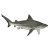 Download And Use Shark  Clipart image #42746