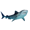 Download Shark Free Images image #42731