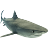 Animal Shark  Clipart image #42750