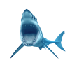 Animal Shark Transparent image #42757