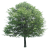 Free Download Of Tree Icon Clipart image #749