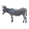 Asinus Photograph Clip Art Grey Donkey Picture thumbnail 47512