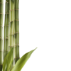Bamboo  Collection Clipart image #40478