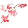 Best Cherry Blossom  Clipart image #45490