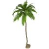 Best Coconut Tree  Palm Clipart image #46400