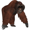 Big And Strong Orangutan Picture image #48073