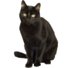 High Resolution Black Cat  Clipart image #30346