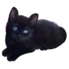 Free Download Of Black Cat Icon Clipart image #30347