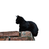 Download Free High-quality Black Cat  Transparent Images image #30365