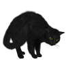 Black Cat Picture image #30351