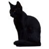 Transparent Black Cat image #30353
