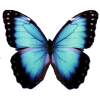 Blue Butterfly image #6716