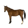 Brown Horse Icon image #26433