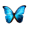 High Resolution Butterfly  Icon thumbnail 6725