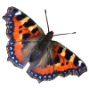 Download Free High-quality Butterfly  Transparent Images image #6740