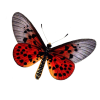 Free Download Of Butterfly Icon Clipart thumbnail 6715