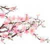 Cherry Blossom  Free Download image #45487