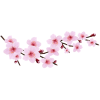Cherry Blossom  Images Free Download image #45485