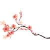 Cherry Blossom  Transparent Image image #45505