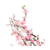 Cherry Blossom Transparent Hd Background image #45491