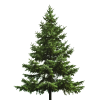 Free Download Of Christmas Tree Icon Clipart image #31864