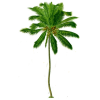 Coconut Tree  Transparent Background image #46407