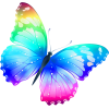 Colorful Butterfly image #6730