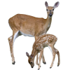High Resolution Deer  Clipart image #32754