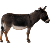 Donkey Animal Transparent image #47501