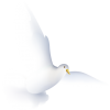 Dove Wedding  Icon image #41736