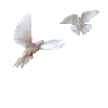 Doves Flying In Sky image #41759