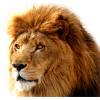 Download Lion  Images Transparent Gallery image #42276