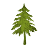 Evergreen Or Fir Tree (trees) 2 Icon #052088 » Icons Etc image #1542