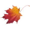 Falling Leaves Transparent Photo image #32636
