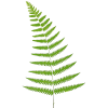 Free Download Of Ferns Icon Clipart image #26190