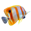Hd Fish Image In Our System image #26338