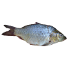 Download Free High-quality Fish  Transparent Images image #26347