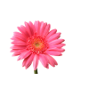 High Resolution Flower  Clipart image #17952