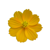 Free Flower Best Clipart Images image #17954