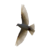 Flying Bird Transparent Background image #3490