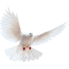 Flying Bird Transparent Background image #41744