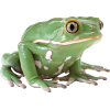 Frog  Image Free Download Image, Frogs image #43154