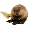 Game Playing Beaver Transparent Image image #47739
