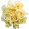 Garden Roses Cut Flowers Bouquet Yellow Rose Family image #48791