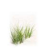 Download For Free Grass  In High Resolution thumbnail 4766