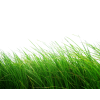 Grass  Images, Pictures Transparent image #44873